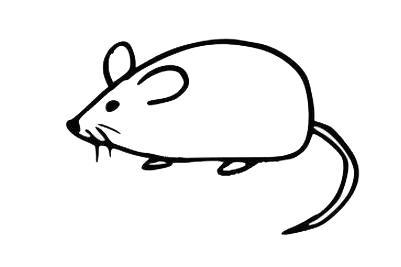 男女宝宝简笔画,儿童画画灵活的小老鼠