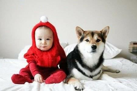 宝宝画画简单图片狗