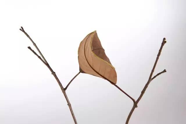 叶子的联想素描素材