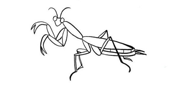宝宝简笔画,昆虫螳螂,儿童绘画