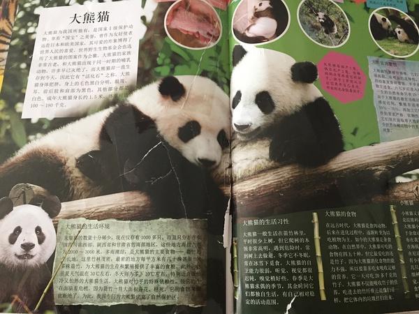 配有大量的真实动物照片,孩子比较容易识别各种动物的主要特征.